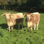 2-cows